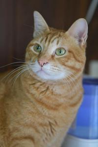 五年達成!猫路地散歩・Part3 - Black Cat Moan
