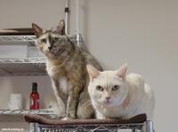 キューポンコ - 賃貸ネコ暮らし|賃貸住宅でネコを室内飼いする工夫