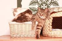 挑戦してみることが大事 - きょうだい猫と仲良し暮らし