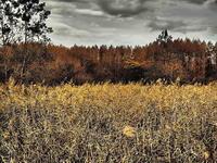 秋の葦の枯野かな - 風の香に誘われて 風景のふぉと缶