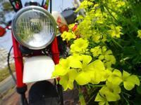 黄色い花 - EVOLUTION