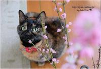 猫と桃の花 - 4にゃん日記+