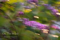 春がやって来ました♪ - ON THE WIND  *mummy's Diary