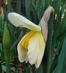 早春の庭 - うまこの天袋
