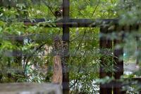 雨の日の避難場所 - 動物園へ行こう