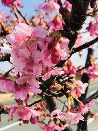 春・春・春近し('ω') - ほっこりしましょ。。
