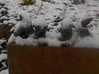 春の雪 - 冬青窯八ヶ岳便り