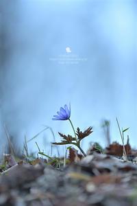Blue - お花びより