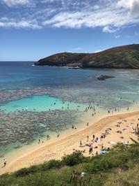 アロハ! Hawaii③ - some day