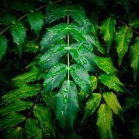 ・雨の降る日に #3・ - - Foliage & Blooms'葉と花' pics. -
