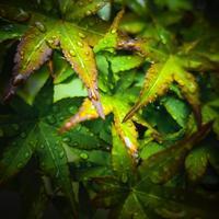 ・雨の降る日に #2・ - - Foliage & Blooms'葉と花' pics. -