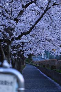 いつかきっと - A primrose by the river's brim