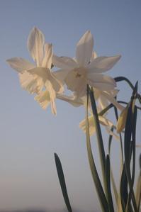 春の風 - はにみゅめも