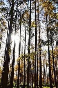 メタセコイア林 - 風の香に誘われて 風景のふぉと缶