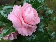 早春の楽しみ 花の歳時記 - 散歩ガイド