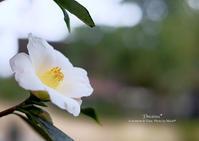 温室の花・花。 - Precious*恋するカメラ