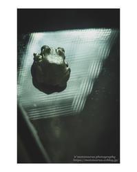 啓蟄 - ♉ mototaurus photography