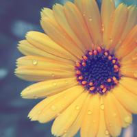 ・ぼやけた黄色花・ - - Foliage & Blooms'葉と花' pics. -