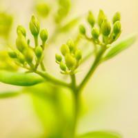 ・まだ蕾んでいる・ - - Foliage & Blooms'葉と花' pics. -