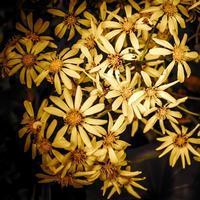 ・満開を過ぎた・ - - Foliage & Blooms'葉と花' pics. -