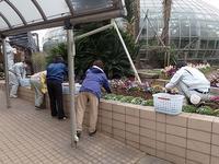 春がちらほら~(#^.^#)♪ - 手柄山温室植物園ブログ 『山の上から花だより』