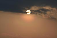 花粉光環 - ヒグラシの日記  (あぁ、しあわせな日々)