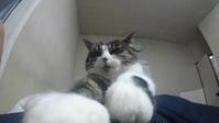 【猫】重いし… - 人生を楽しくイきましょう!