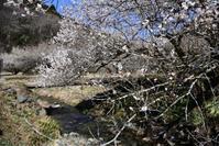 春の小川♪・・・ - 趣味人の時偶ブログ