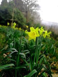 早春にイギリスカントリーサイドの町でクラフトフェアに出店 - 英国つぶやき花生活