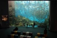 まゝに/のとじま水族館 Pt.1 - Maruの/ まゝに