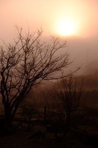 霧の朝 - きずなの家創り