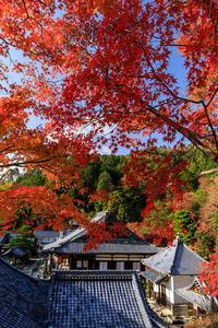 京の紅葉2018散り紅葉の柳谷観音(楊谷寺) - 花景色-K.W.C. PhotoBlog