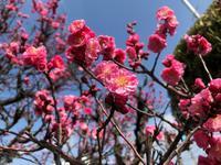 (*'▽')♪日ごとに春めいてきましたね♪ - Every day is indifferently spent.