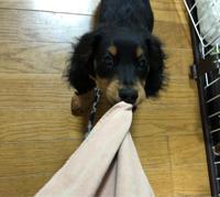 犬の知識を深める - 自分探しの旅