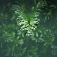 ・緑と白のまだらな葉っぱ・ - - Foliage & Blooms'葉と花' pics. -