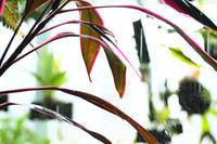 温室の植物 - PhotoWalker*