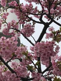 横浜馬車道 piecing 3月のオープン予定 - piecing・針仕事と庭仕事の日々