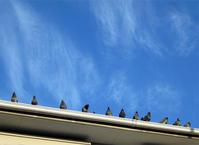 青い空に鳩 - のんびり街さんぽ