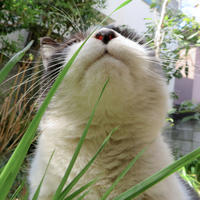 草食べのトメち - にゃルニア日記