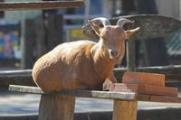 なかよしコーナーの動物たち~コツメカワウソ六つ子BABYお披露目!!(埼玉県こども動物自然公園) - 続々・動物園ありマス。