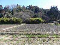 風は冬。晴れると水たまりの田んぼには、、。 - 千葉県いすみ環境と文化のさとセンター