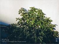 春の陽射し、東京 - Yin Yang 陰陽(アジアンフォトエッセイ)