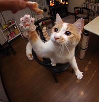ヨウカンさん化計画 - ぶつぶつ独り言2(うちの猫ら2018)