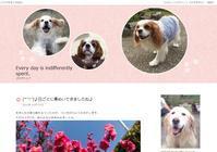 (*'▽')♪ブログのデザインを変更しました(*´▽`*)♪ - ヽ(^o^)丿How happy I can be with you!