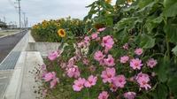季節感・・・なし・・ - 沖縄本島最南端・糸満の水中世界をご案内!「海の遊び処 なかゆくい」