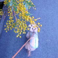 3/8(金)   正直な気持ち - Evergreen. ~常磐に唐草*庭の花~