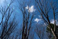 冬から早春へ - 彩りの軌跡