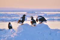 道東巡り_流氷の海の朝焼け - 彩の国 夢見人のフォト日記