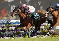 今週の重賞レース出馬表 - ホースバーエルコン HORSE BAR ELCON