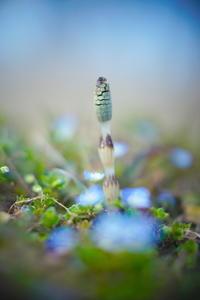 野は春 - summicron